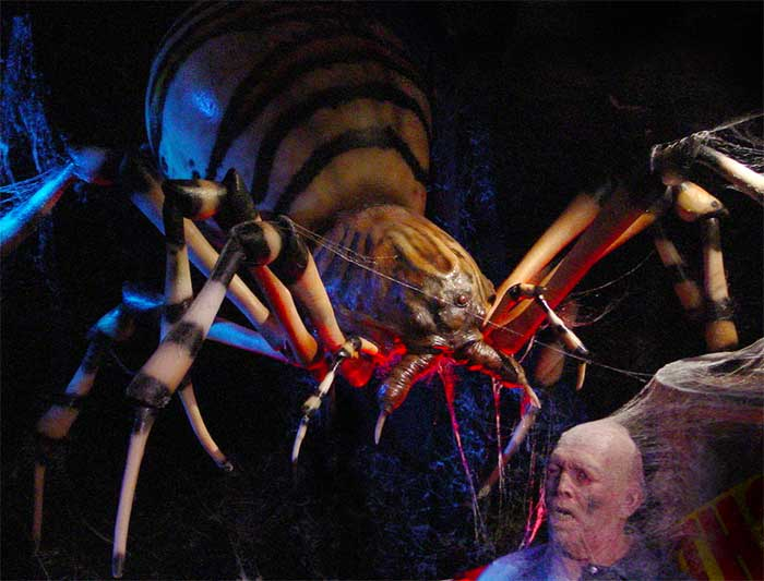 Go Back > Gallery For > Eight Legged Freaks Spider Species